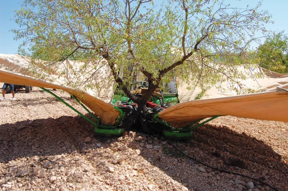 Una de cada tres almendras producidas en España será andaluza según la primera estimación para la nueva campaña