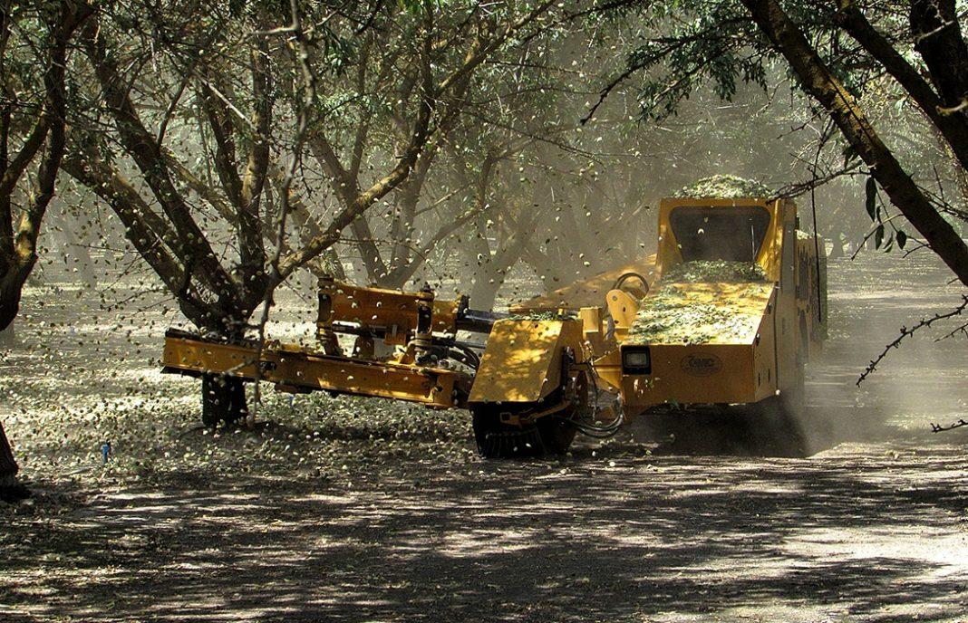 La nueva campaña de la almendra comienza a cotizar en la Lonja de Albacete