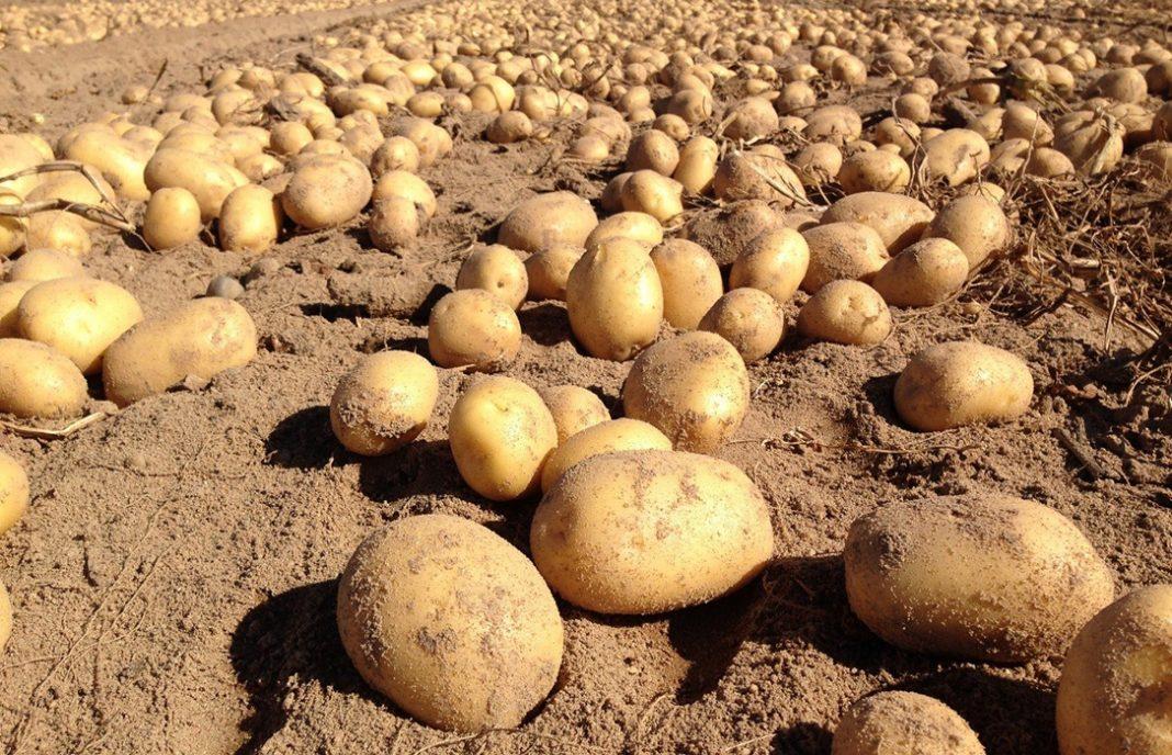 Insisten en que la Ley de la Cadena Alimentaria no funciona: la industria y la distribución se la comen con patatas