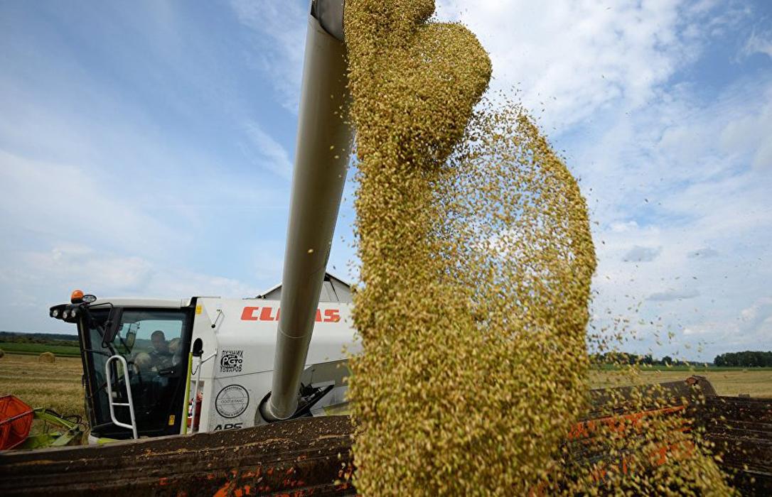 Suben los precios de los cereales en los mercados mayoristas, excepto el trigo duro que repite