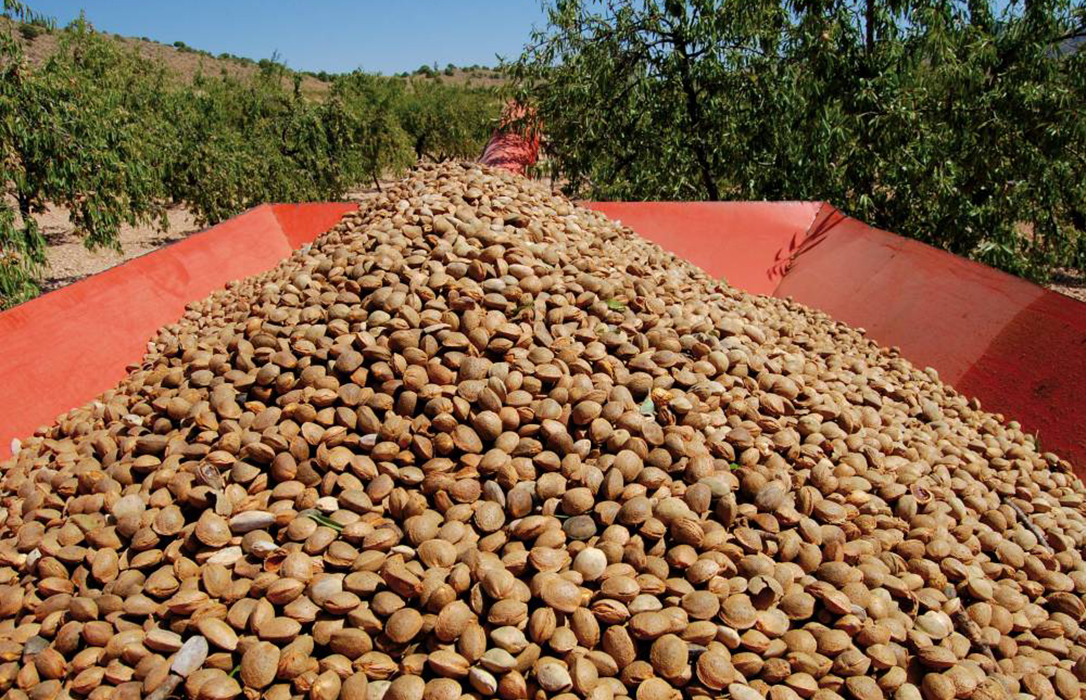 Más de 200 agricultores abordan la situación del mercado de la almendra, que triplicará su producción en pocos años