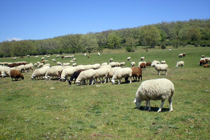 El consumo de carne de cordero y cabrito, clave para frenar la despoblación y fomentar la sostenibilidad