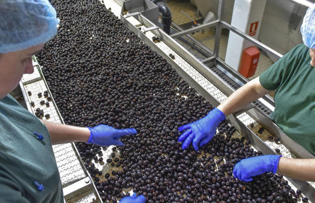 Los aranceles de EEUU a la aceituna negra española le cuestan ya 27 millones de dólares al sector
