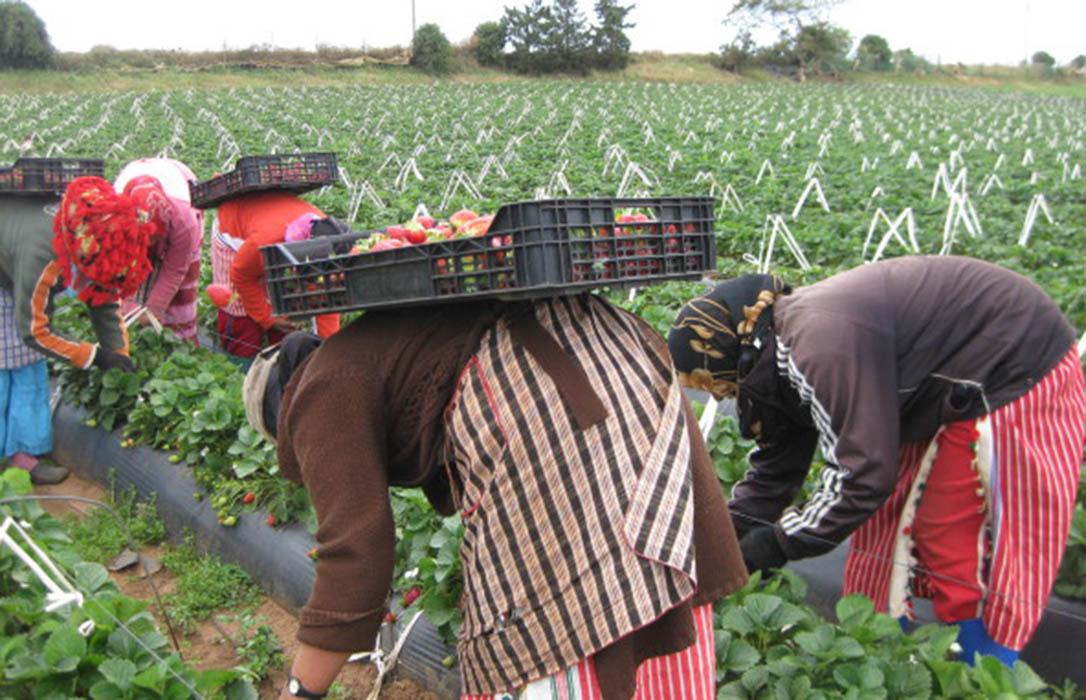 El Congreso aprueba que se condicione el pago de la PAC a las empresas condenadas por conflictivad laboral