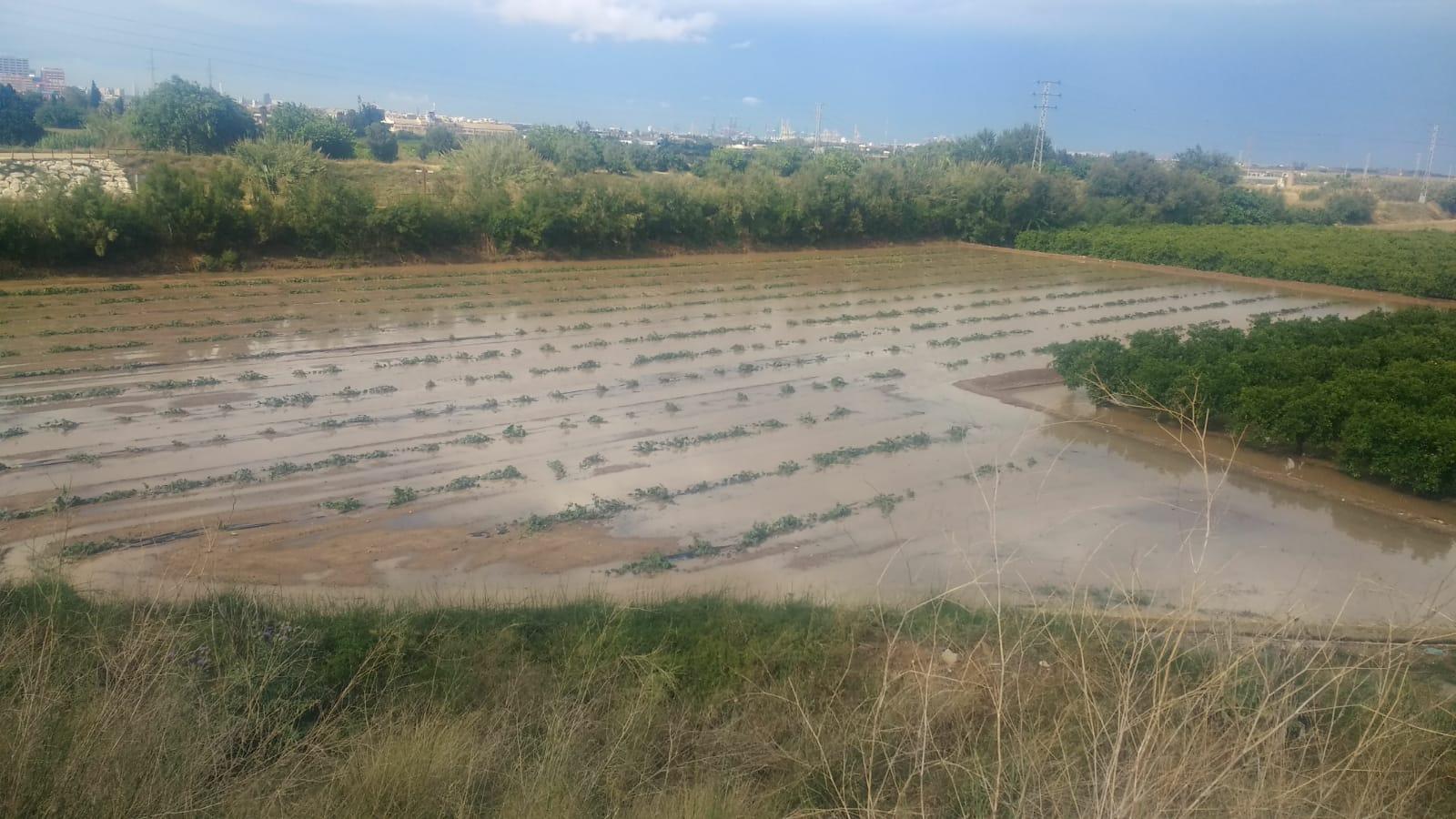 Las tormentas de pedrisco registradas vuelven a causar daños en la agricultura valenciana