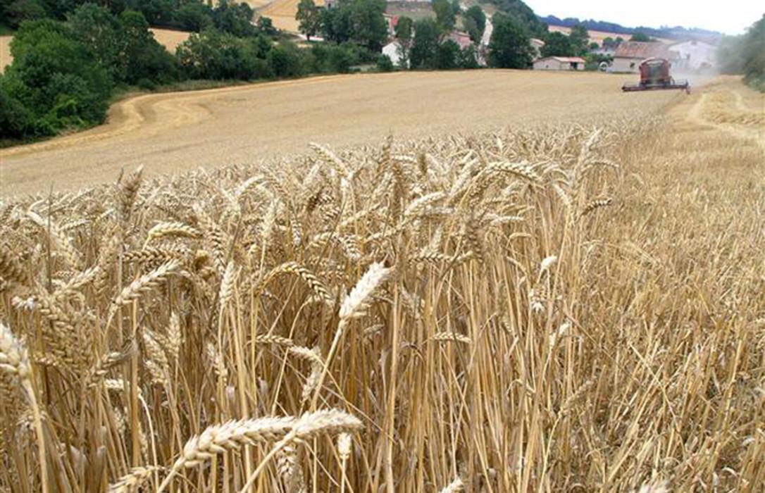 Los cereales rompen su tendencia a la baja y suben de forma generalizada con aumentos de hasta 3 euros la tonelada