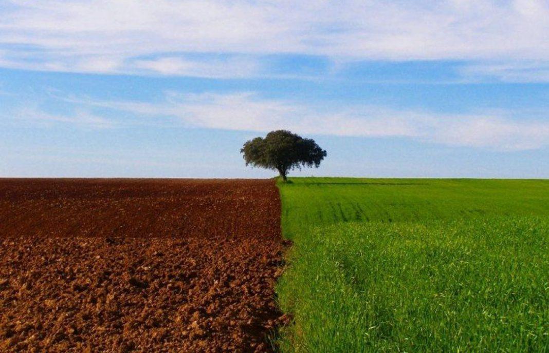 La mitad de los campos agrícolas serían innecesarios si fueran más eficientes aunque impulsaría el uso de fertilizantes