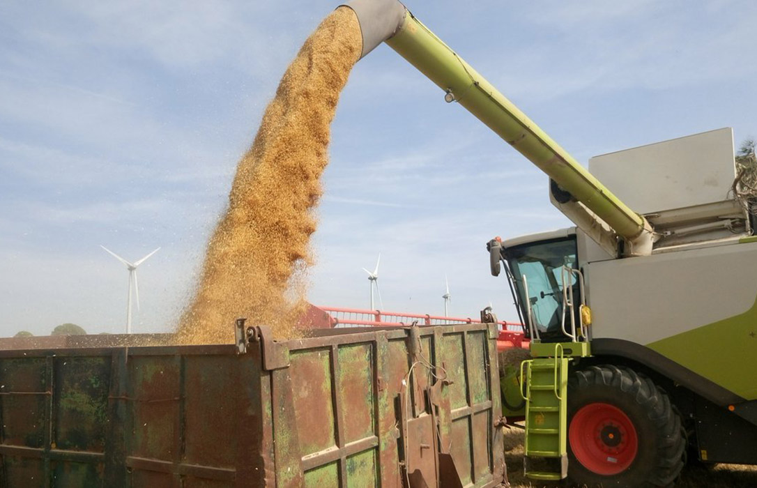 El Ministerio ratifica las previsiones de un descenso de la superficie de cereal otoño-invierno en 2019