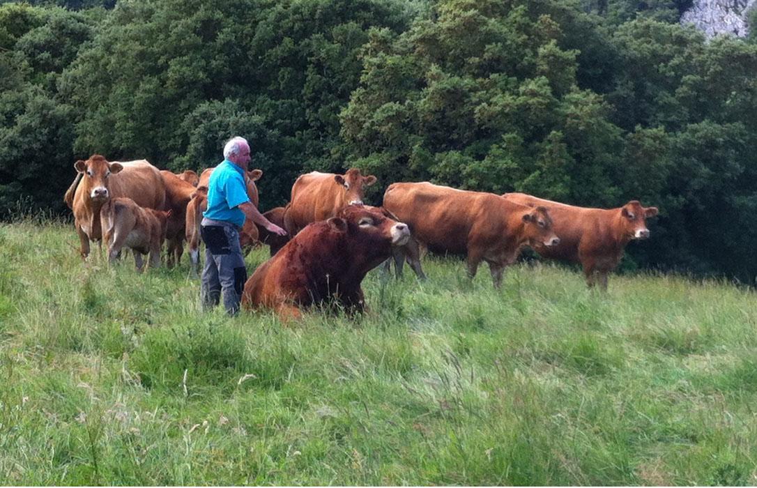 Saneamiento ganadero: reclaman facilitar los movimientos de ganado de bovino a cebaderos