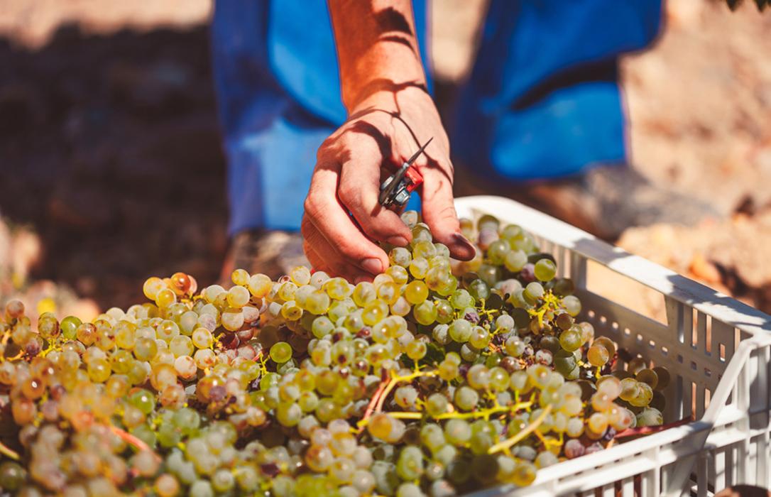 Respaldo a exigir un mínimo de 9º a la uva de vinificación pero con controles para que no se convierta en otra bolsa de fraude