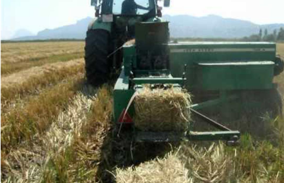 Finiquitada la campaña de cereal de invierno en León con nuevas bajadas, como en el resto del año