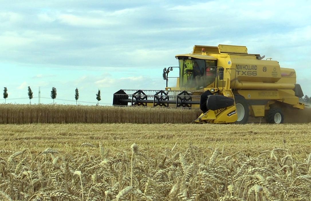 Ante una cosecha excepcional de cereal abogan por no vender a cualquier precio y apostar por las cooperativas