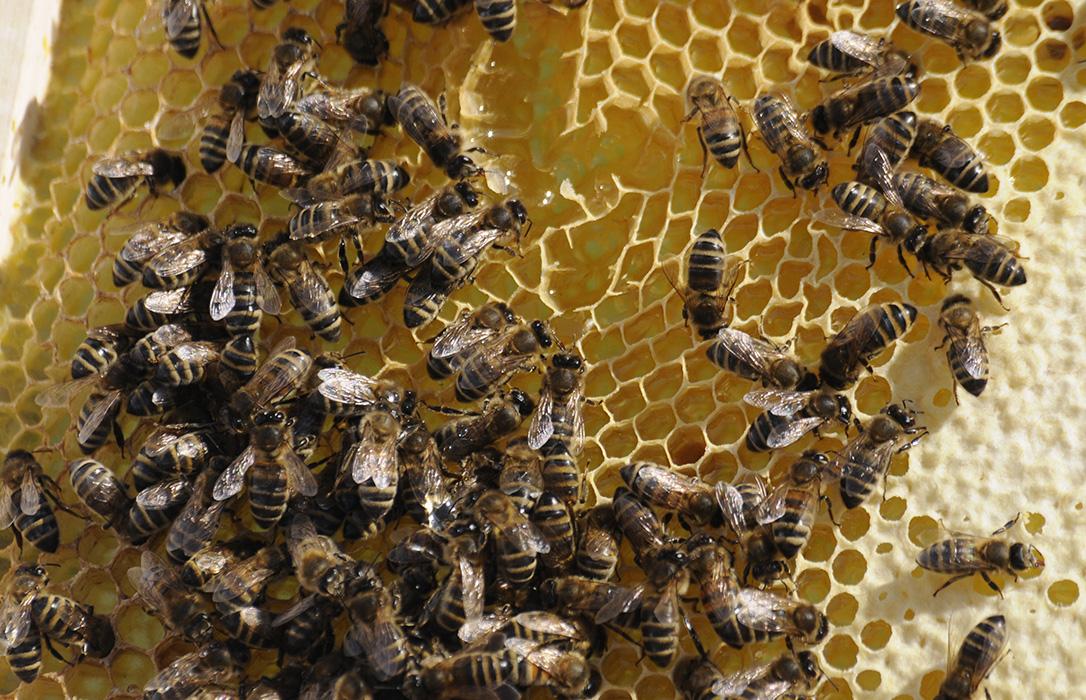 La exigencia de la indicación obligatoria del origen en el etiquetado de la miel llega al corazón de Europa