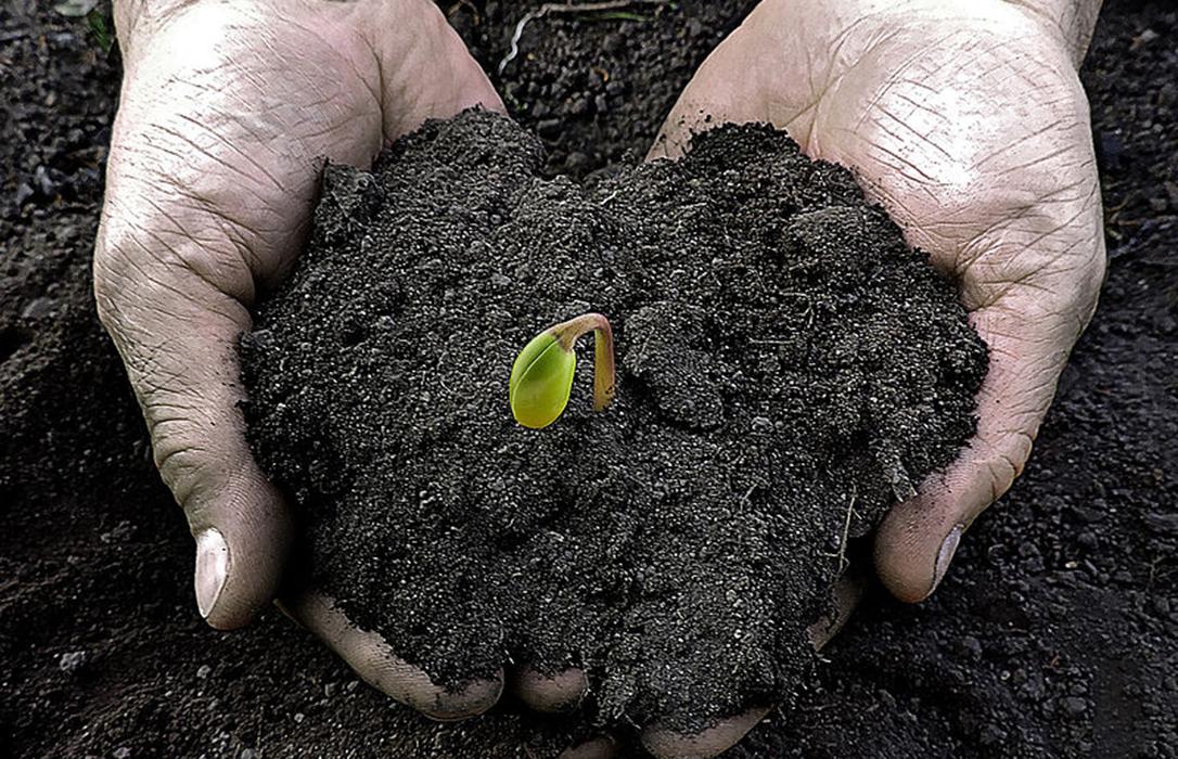 Industria europea de las semillas, unánime a favor del CRISPR y su diferencia de los transgénicos