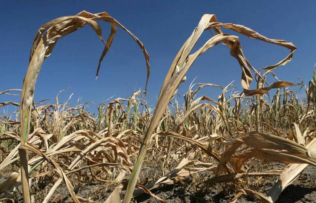 Otro modelo de ayudas: Subvenciones especiales para la agricultura alemana para paliar los daños de la sequía