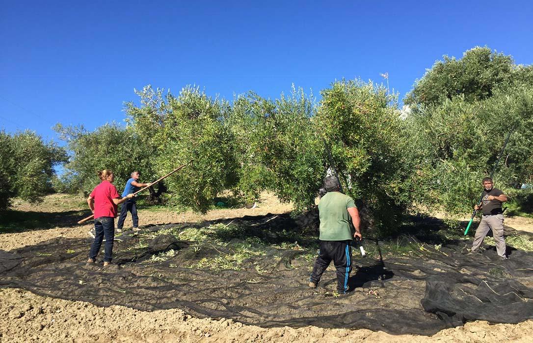 Pedro Barato anuncia que pronto habrá una ley para regular toda la trazabilidad del aceite de oliva