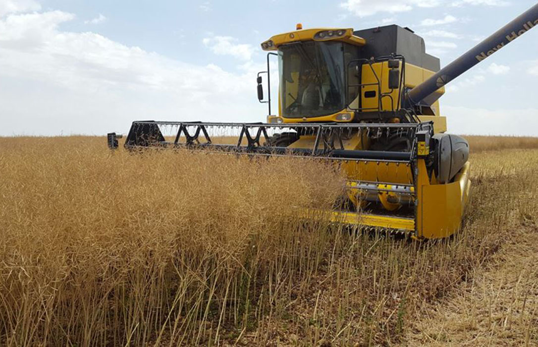 Sigue el buen momento para el sector: Continúan al alza los precios del trigo, la cebada y la avena