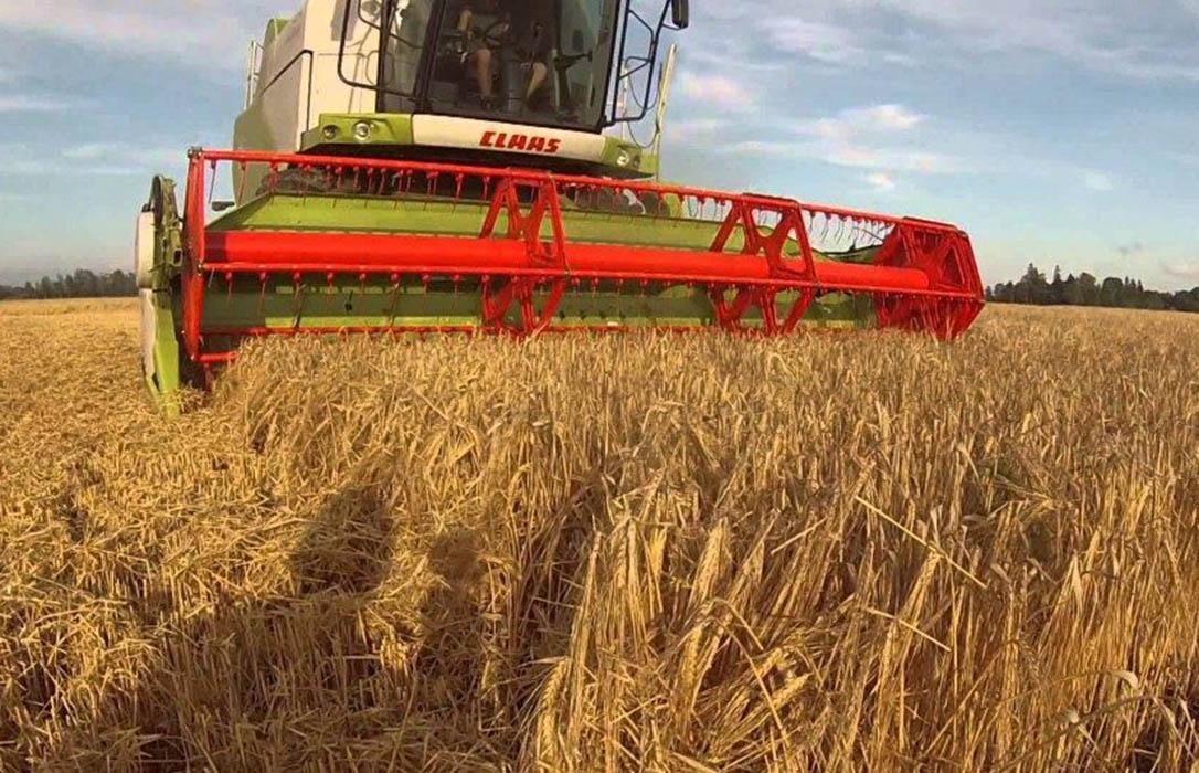 Se corrige ligeramente a la baja el precio del trigo y descenso más significativo de la cebada