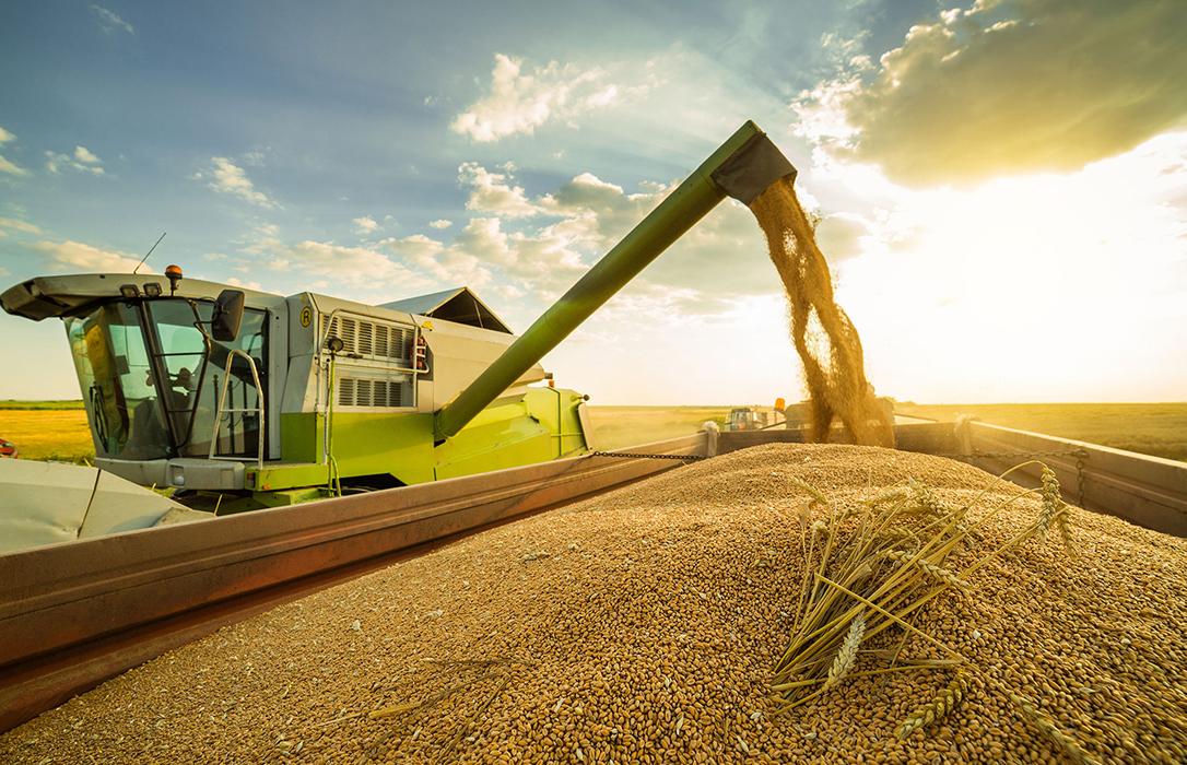 La cebada ya ha ganado 8 euros en un mes y logra mantener una subida en las cotizaciones de todos los cereales