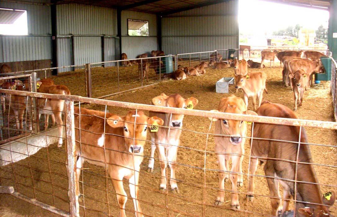 JARC evita que las granjas de terneros de engorde de sus asociados pierdan 8.500 € de ayudas de la PAC