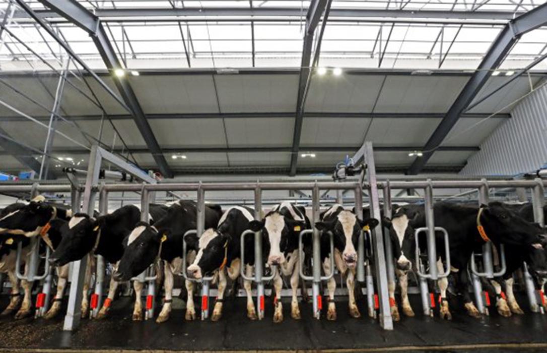 Llevan hasta Bruselas la prohibición de las macrogranjas y la defensa de la ganadería familiar