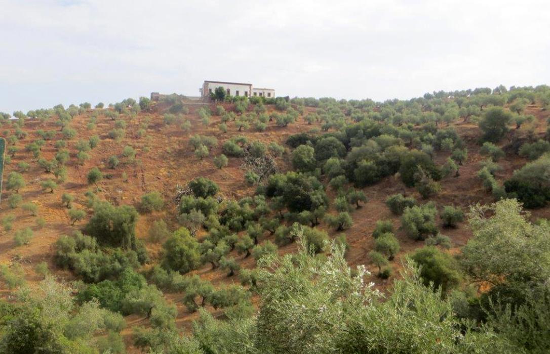 Andalucía realiza un nuevo pago de 12,2 millones de euros en ayudas agroambientales para más de 8.550 beneficiarios
