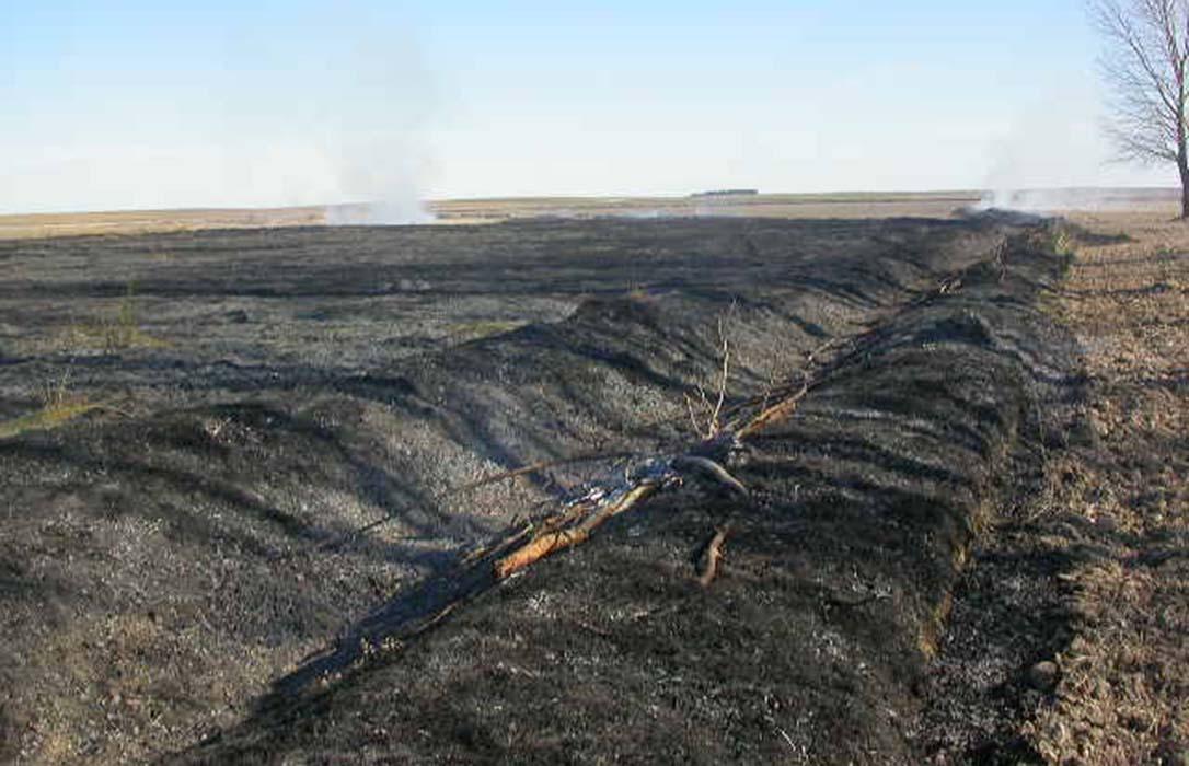 La justicia prohíbe la quema de rastrojos en parcelas de explotaciones agrarias para acabar con los topillos