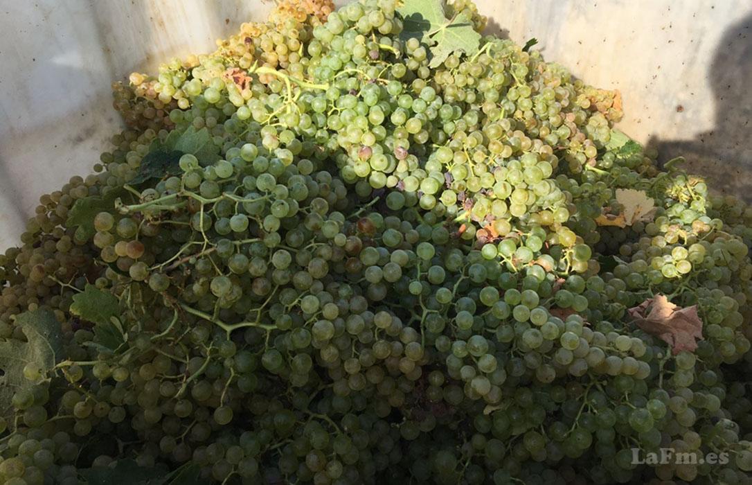 Viñistas y cooperativas vitivinícolas del Marco de Jerez se unen para frenar el bajo precio de la uva