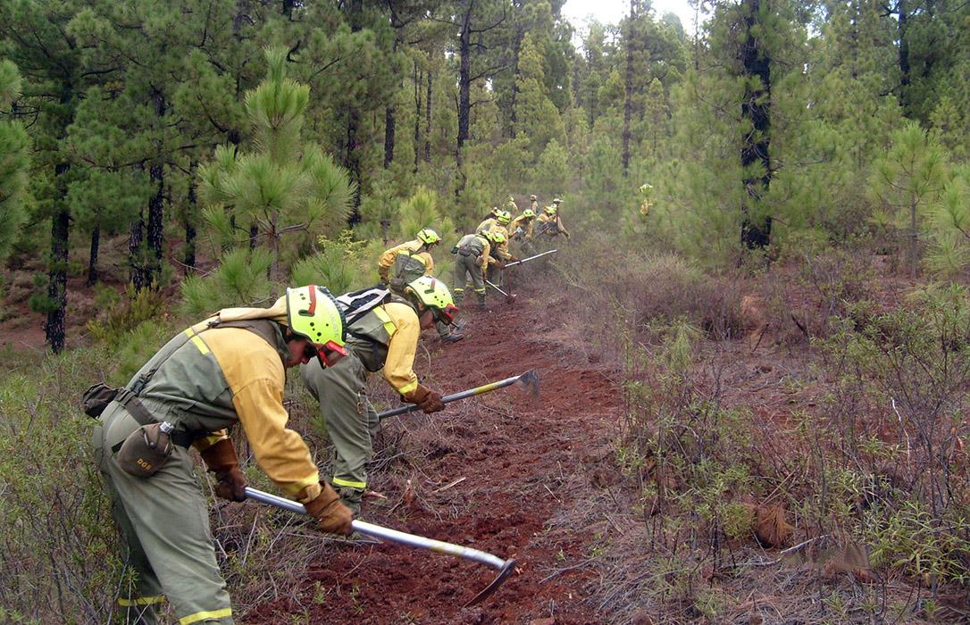 Juntos por los Bosques denuncia la marginación de los espacios forestales en la aplicación de la PAC