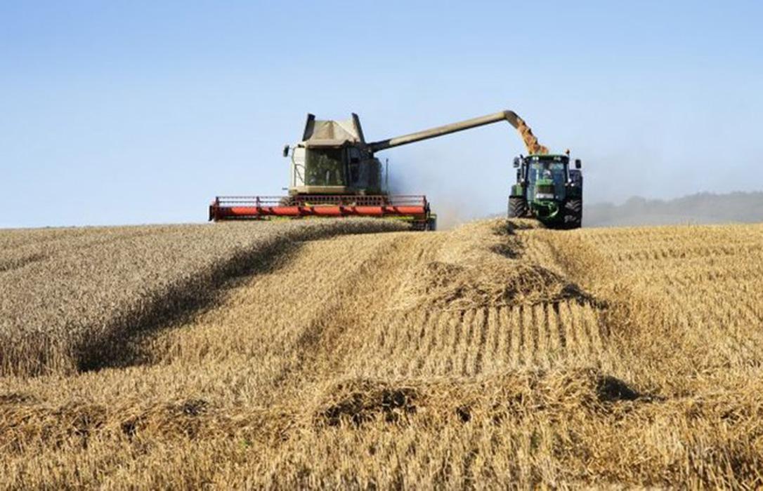 Continúa el descenso generalizado de unos precios mayoristas del que solo se salva el trigo duro esta semana