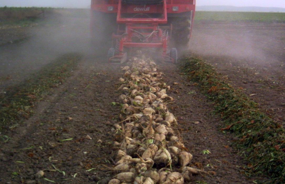 El pulso de Azucarera al sector y la entrada de un nuevo actor revolucionan el sector del azúcar