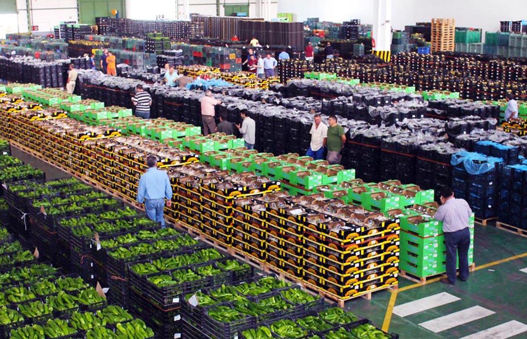 El fondo de inversión Abac acuerda la compra del grupo hortofrutícola almeriense Agroponiente
