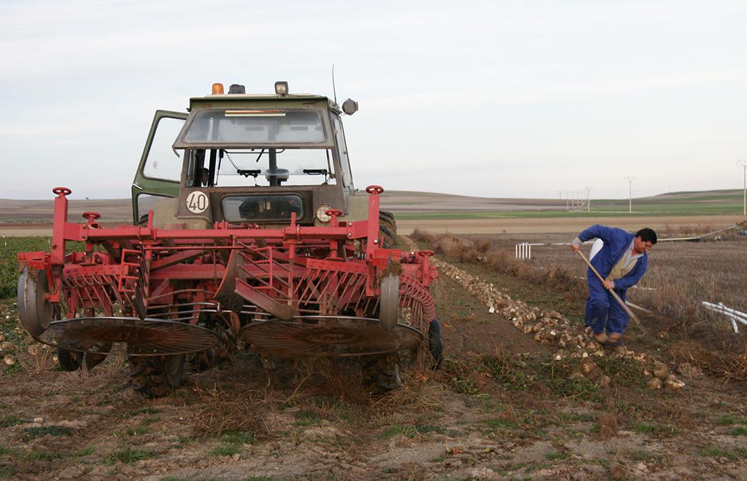 CyL decide pagar las ayudas a la remolacha de 2012 a todos los agricultores y no solo a quienes las denunciaron