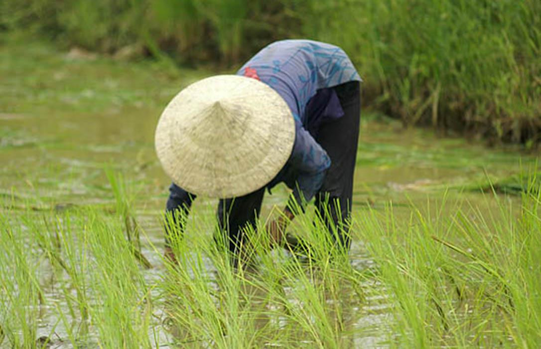 Camboya acusa la UE de «matar» a sus agricultores con los nuevos aranceles al arroz