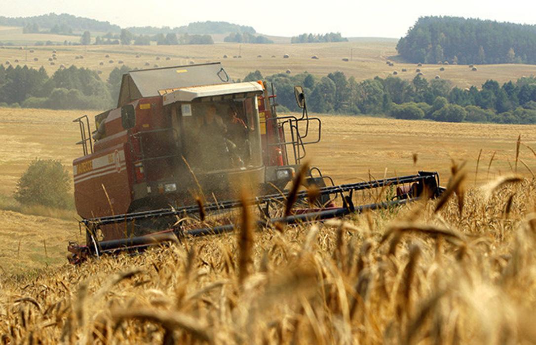 La subida del trigo se frena un poco en la lonja de León y ya hay dudas sobre si es el momento de vender