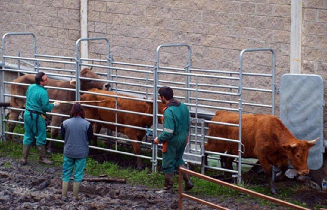 El Gobierno propone rebajar el IVA a los servicios veterinarios al tipo reducido del 10% en lugar del 21% actual