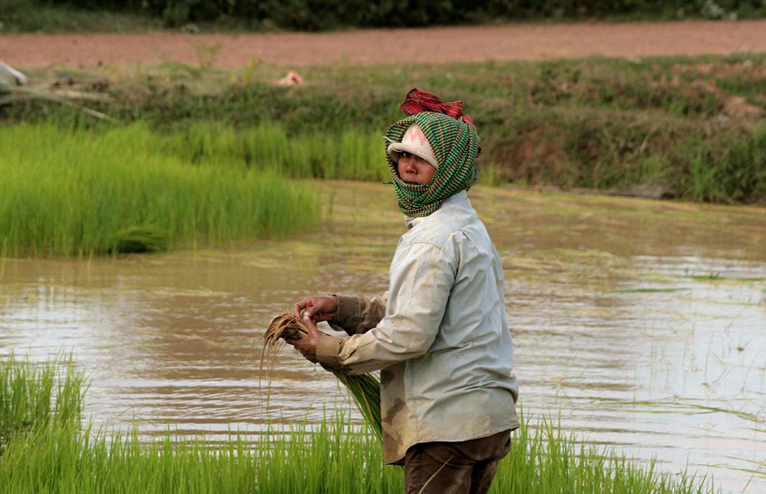 La UE aprueba la cláusula de salvaguarda sobre las importaciones de arroz procedentes de Camboya y Myanmar