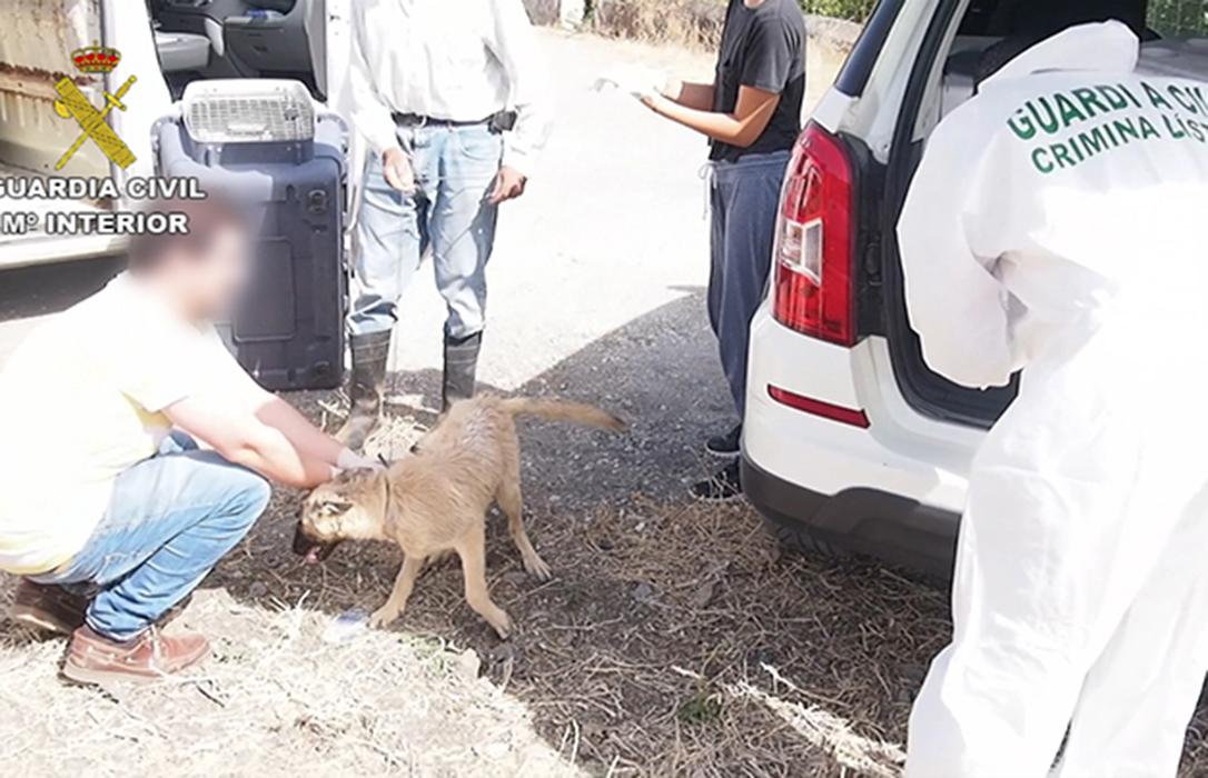 El SEPRONA detiene o investiga a cerca de 600 personas por delitos contra el maltrato animal