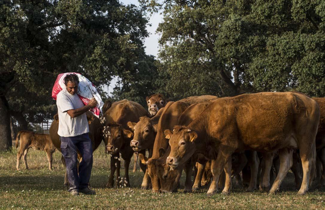 Dura respuesta de la CE y el sector ganadero a Greenpeace: Infundado y simplista su informe sobre ganadería y PAC
