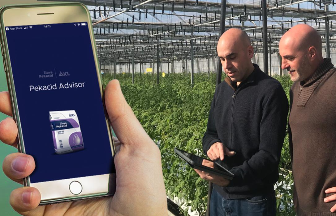 Nueva App de ICL de ayuda al agricultor: App PeKacid