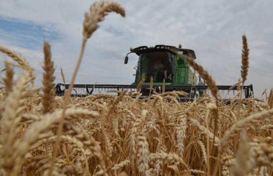 No corren buenos tiempos para los cereales, con nuevas bajadas de hasta 3 euros en la lonja de León