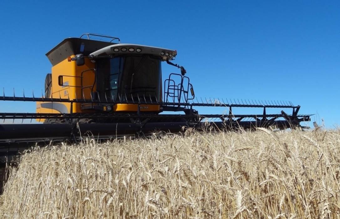 El precio medio mayorista del trigo duro retoma la tendencia alcista que acumula este año