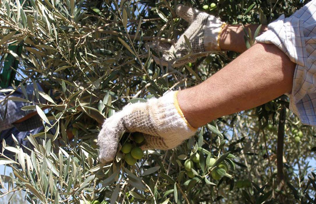 España apuesta cada vez más por una PAC verde como una oportunidad de negocio en lugar «de una limitación»