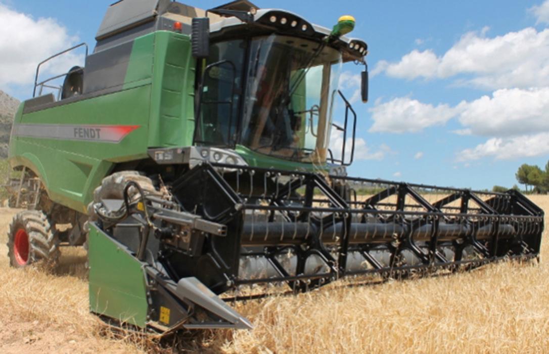 El trigo duro toma un poco de aliento y frena su caída, aunque no el resto de cereales en los mercados mayoristas