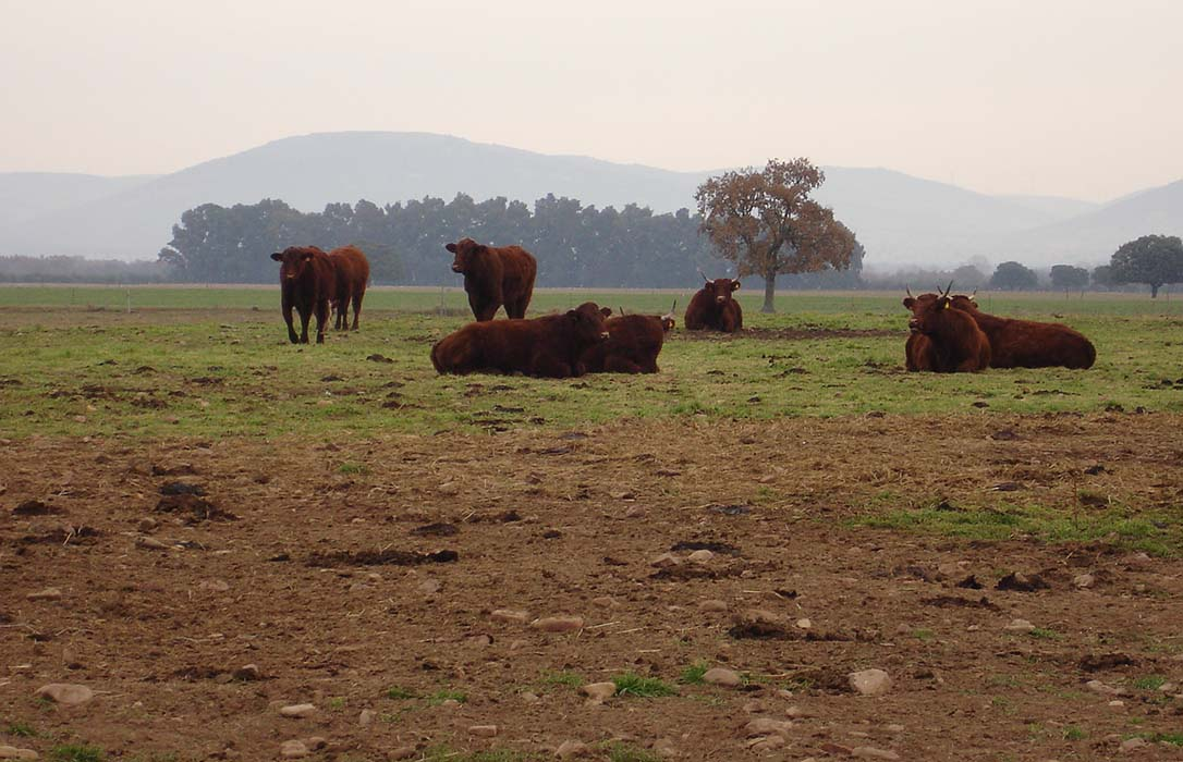 Agroseguro presenta en Toledo las novedades de los seguros de ganado para la campaña 2019