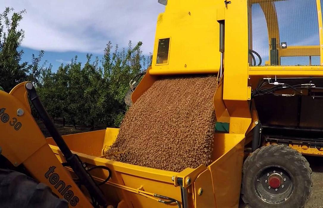Cambio de metodología: La producción de almendra para esta campaña tiene una previsión de 95.579 toneladas de almendra grano