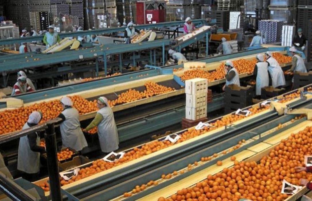 El precio de alimentos se multiplicó por 4,6 de origen a destino en abril arrastrados por los cítricos y el ajo