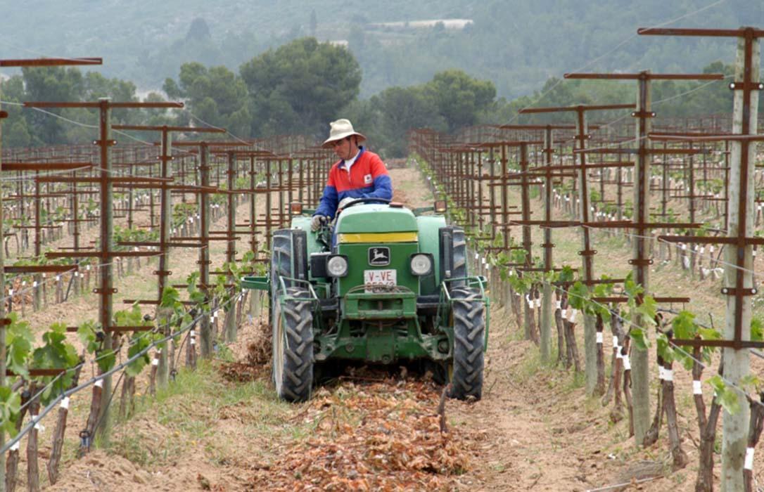 ¿Agricultor genuino o agricultor pluriactivo?: Se abre un debate en el que está en juego el futuro de los pequeños agricultores