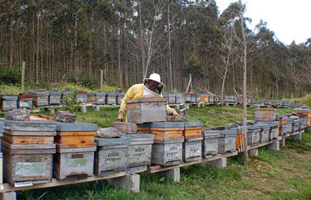 La producción de miel clara de primavera será un 80% menor a la de una campaña normal