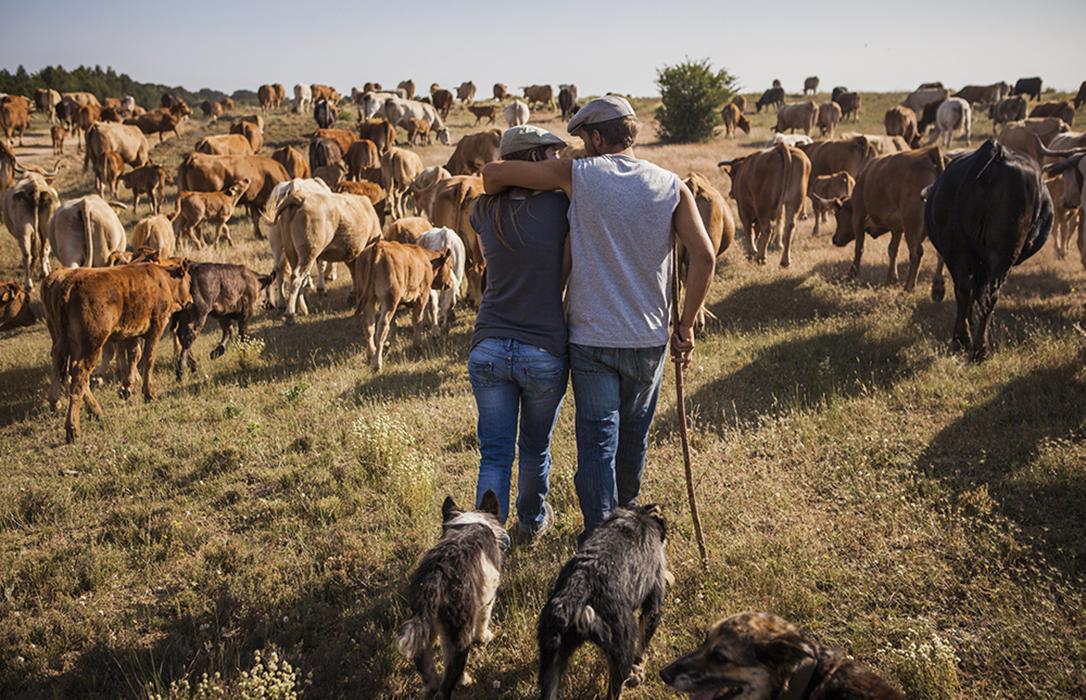 Agricultores y ganaderos reciben 4.605 millones de la PAC por parte del Feaga en el primer semestre fiscal